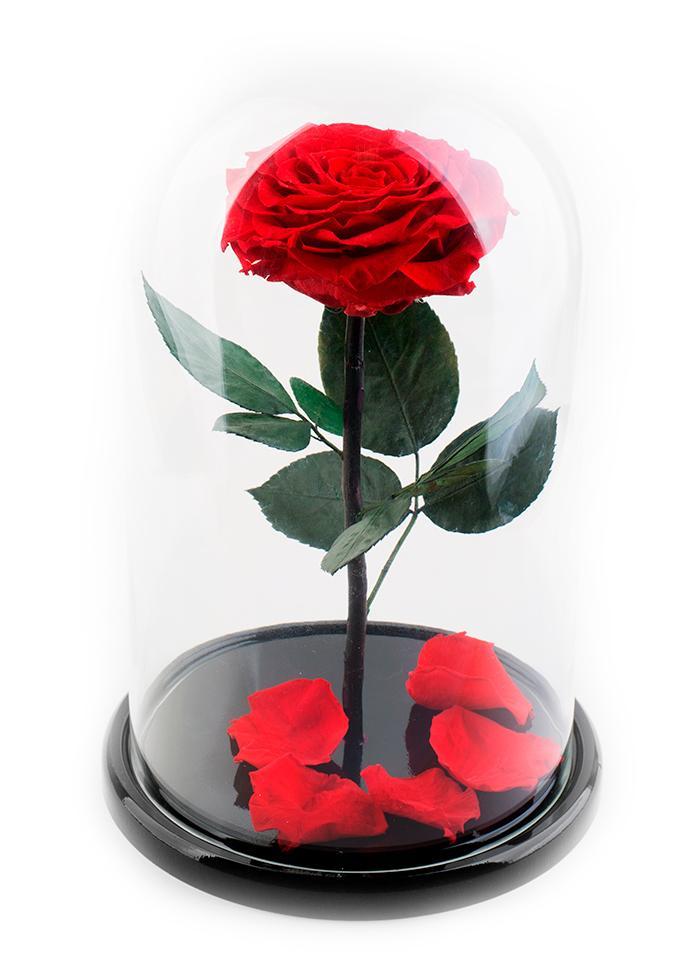 Живые цветы, цветок в капсуле купить в москве